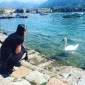 Como, Lugano si Bellagio - unde lumea e buna pentru ca asa e ea!